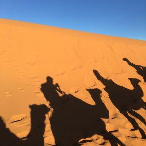 Desert - Camels
